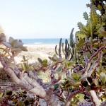 schöner Strandblick Costa Calma