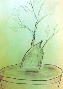 Süßkartoffel in Schale pflanzen