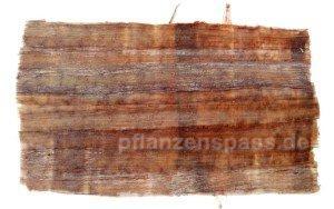 Papyrus Mark wird als Gitter gelegt