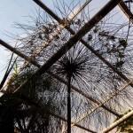 Papyrus wächst bis ans Dach