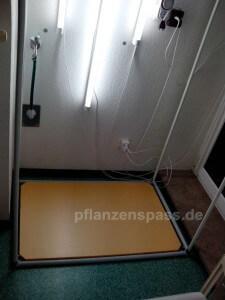 Cyperus Papyrus Zimmergewächshaus Bodenplatte und Beleuchtung