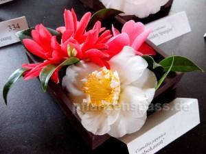 Camellia japonica Farben braune Blätter