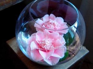 Camellia japonica pink Blüten