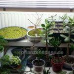 Pflanzenbeleuchtung LED