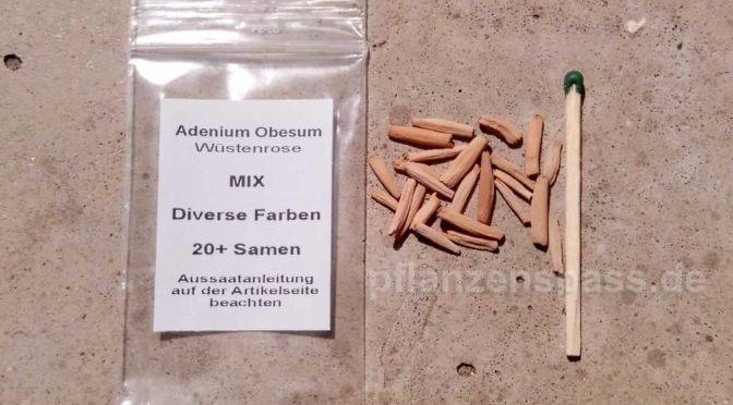 Aussaht und Anzucht des Adenium Anleitung