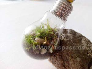 mini Terrarium in Glühlampe basteln