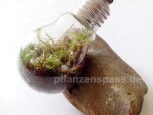 Terrarium Glühbirne beschlägt