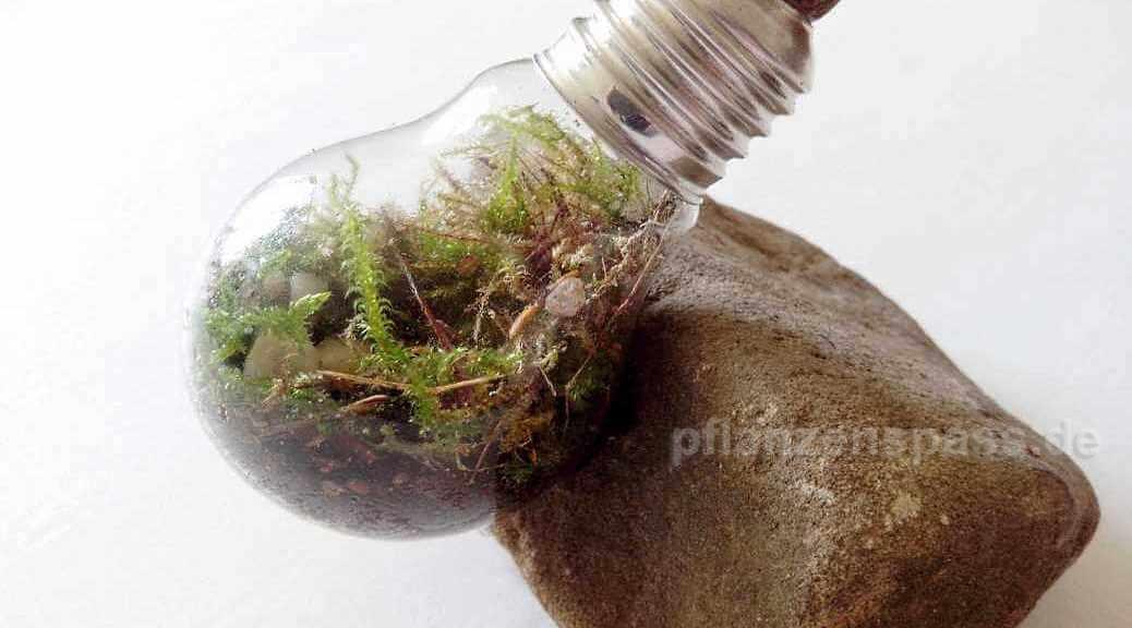 Bastel-Tip mini-Terrarium mit Moos und Steinen