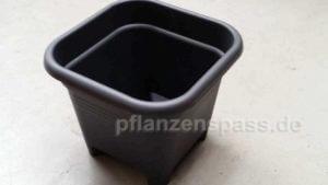 elho Bonsaitopf Kunststoff maskuline Form