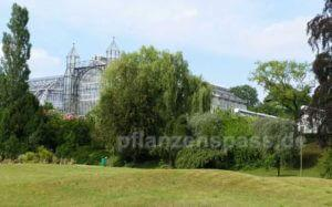 BGBM Botanischer Garten Park Gewächshaus