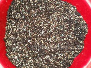 Substrat Mischung für Adenium obesum selber ziehen