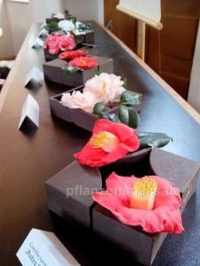 einzelne Blüten Camellia japonica