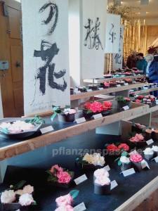 Kamelienblüte Ausstellung Pirna Zuschendorf