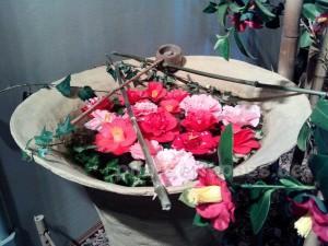 Camellia japonica Kamelie kommt aus Japan Ostasien
