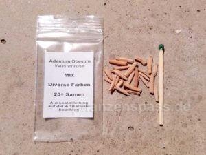 Samen Wüstenrose Adenium obesum