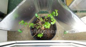 Zimmerpflanzen Tageslicht Reflektor selber bauen