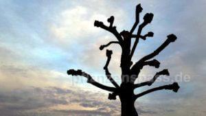 Bäume im öffentlichen Anlagen verschneiden gestalten
