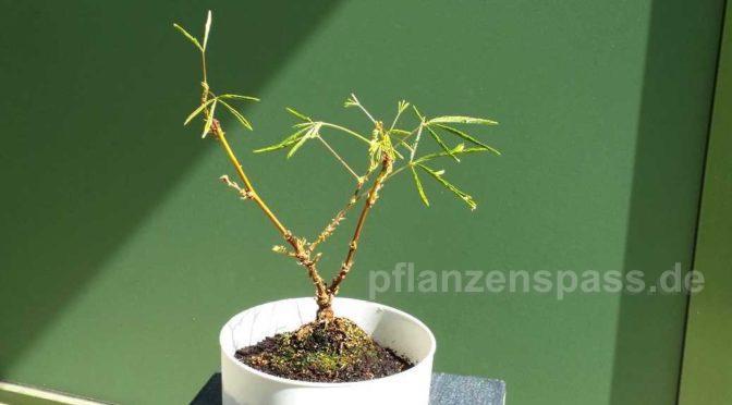 vom ikea klammerkörbchen zur bonsai schale – easy gestalten
