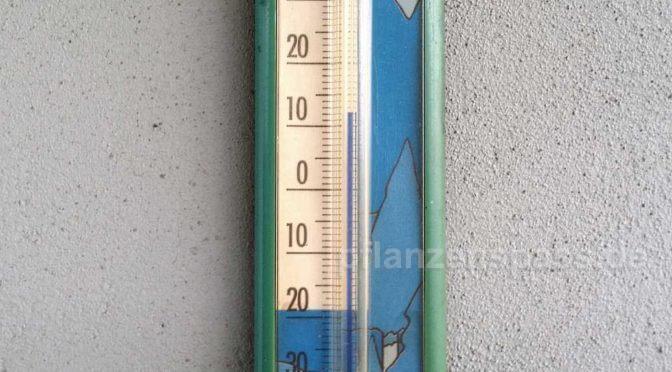 frostgefahr auf dem balkon – wie kalt vertragen meine zimmerpflanzen