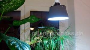 Pflanzenlampe Hängeleuchte selber bauen